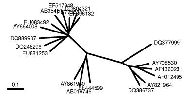 A quick-and-dirty tree of life, built using PyCogent and 16s rDNA sequences from the Silva database.